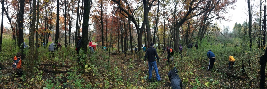 Volunteers at Newport buckthorn pull