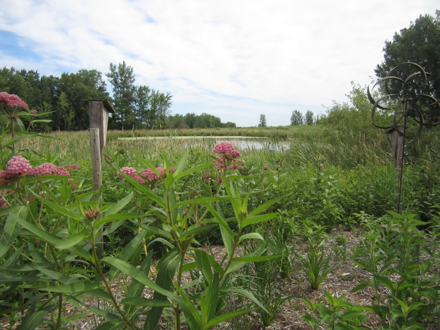 A border of native plants blends seemlessly with the nearby wetland at a home in Oakdale