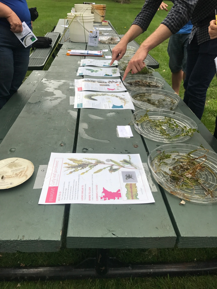 Local residents learn how to ID common aquatic plants at a hands-on workshop