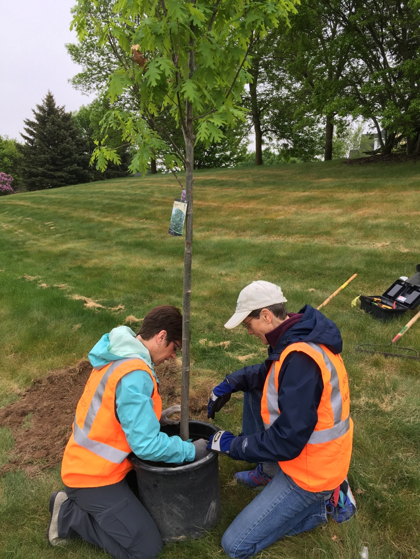 Joan Nichols, right, helps to prep a tree for students to plant at Middleton elementary