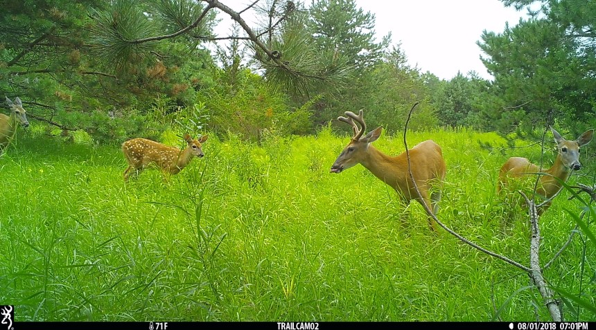Deer pic from trail camera at 110th st property