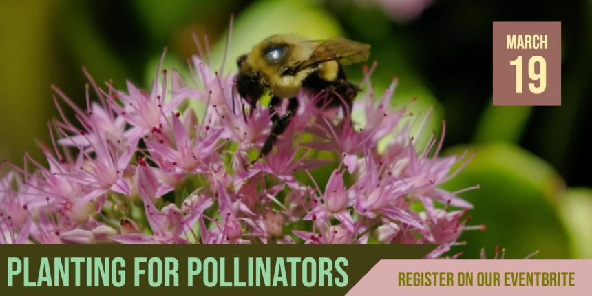 Planting for Pollinators_Eventbrite_0319