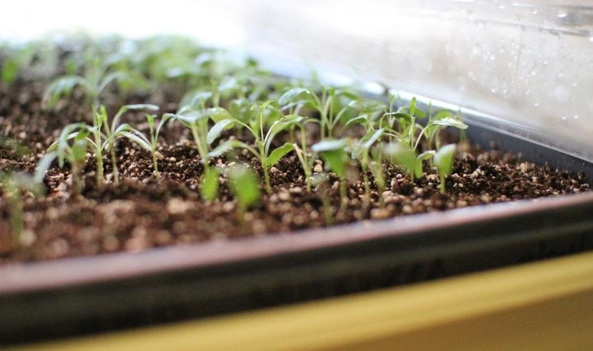 MayLee-seedstarting-IMG_1710